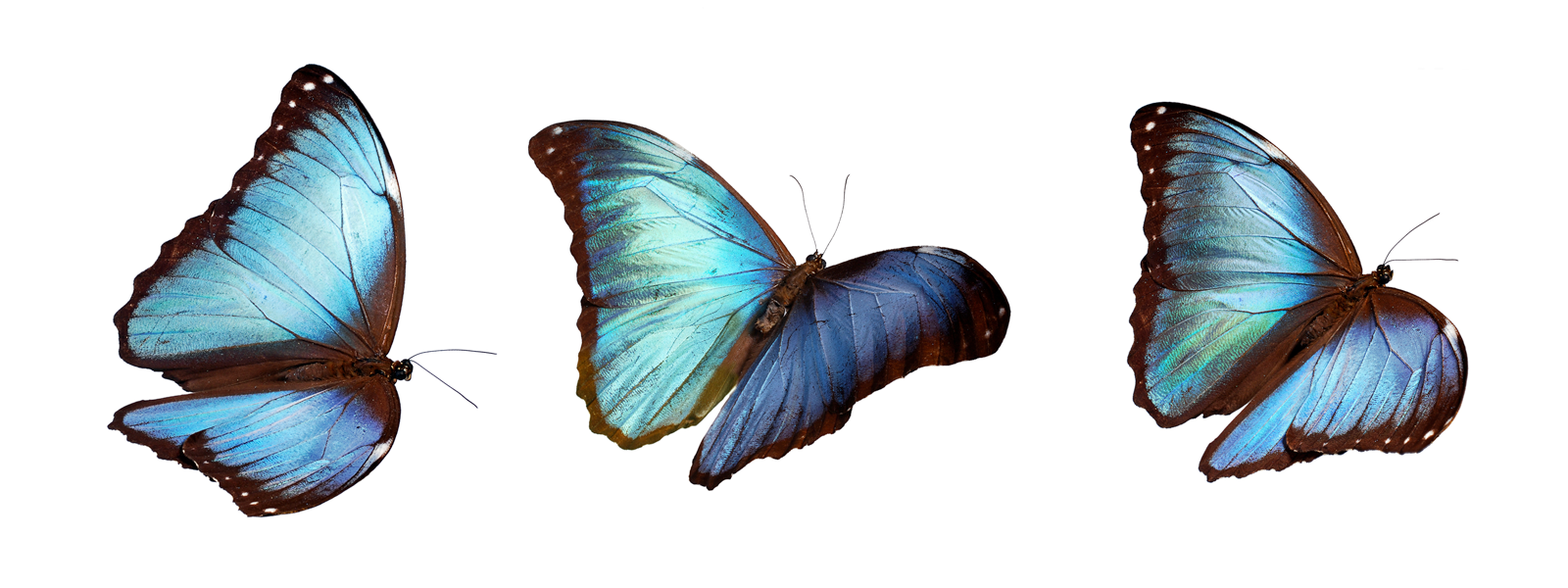 ovnp_headerimages_butterfly1