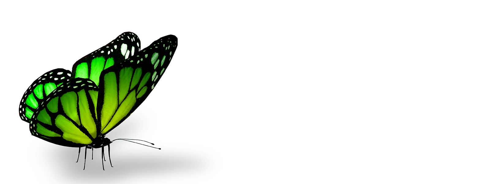 ovnp_headerimages_butterfly3