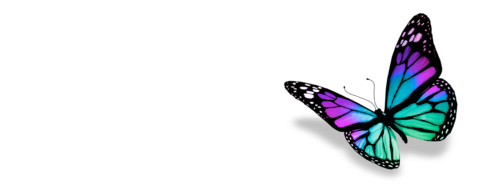 ovnp_headerimages_butterfly4