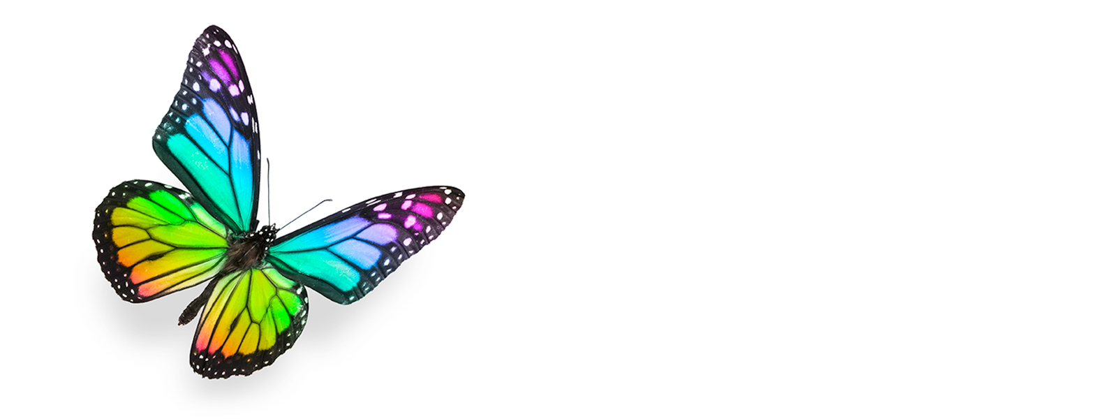 ovnp_headerimages_butterfly6